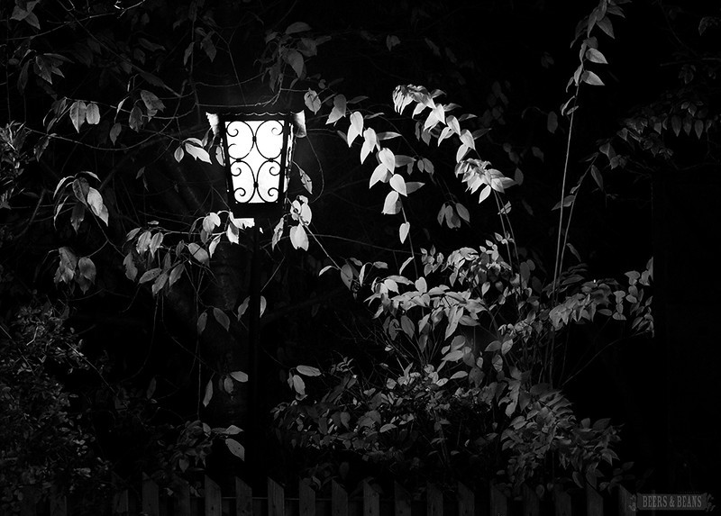 Bushes glow under the light of a lamp near where we went wine tasting in Vienna.
